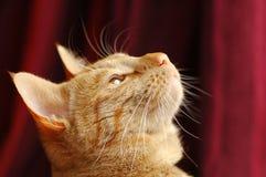 猫分心 免版税库存图片