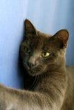 猫剪切 免版税库存图片