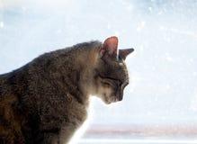 猫剪影在窗口的 库存图片