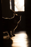 猫剪影在窗口的 免版税库存图片
