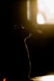 猫剪影在窗口的 图库摄影