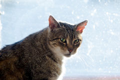 猫剪影在窗口的 免版税库存照片