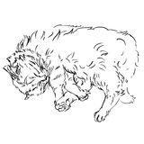 猫剪影用不同的姿势 乱画 库存图片