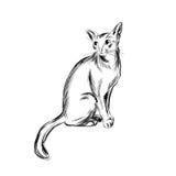 猫剪影,手拉的传染媒介例证 免版税库存照片
