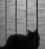猫剪影 免版税图库摄影
