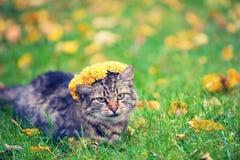 猫加冠与花花冠 库存图片