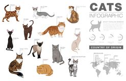 猫助长infographic模板,传染媒介象 免版税库存图片