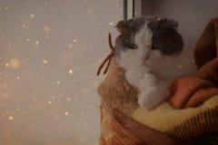 猫包裹了温暖的方格的格子花呢披肩坐窗口基石 库存照片