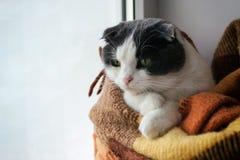 猫包裹了温暖的方格的格子花呢披肩坐窗口基石 图库摄影