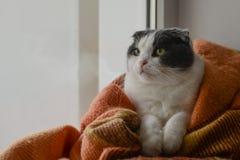 猫包裹了温暖的方格的格子花呢披肩坐窗口基石 免版税图库摄影