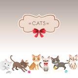 猫卡片 免版税图库摄影