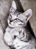 猫厚颜无耻的照片 免版税库存照片