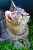 猫口鼻部 库存照片