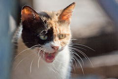 Ðeowing猫 库存照片