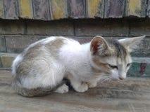 猫叫声 图库摄影