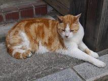 猫叫声i& x27; m neko 免版税图库摄影