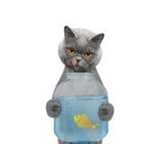 猫吃从水族馆的银行的鱼--isola 免版税库存照片