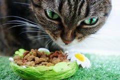 猫吃 免版税图库摄影