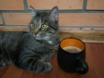 猫和一杯咖啡 免版税库存图片