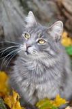 猫和下落的叶子 图库摄影