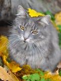 猫和下落的叶子 免版税图库摄影