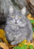 猫和下落的叶子 免版税库存照片