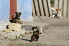 猫和两条狗 免版税库存照片
