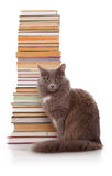 猫和书 免版税库存图片