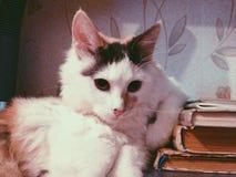 猫和书 图库摄影