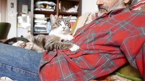 猫和人友谊 影视素材