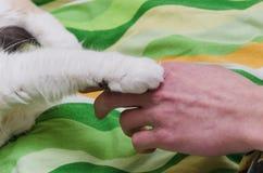 猫和人 免版税库存图片