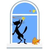 猫和前片枫叶 免版税库存照片