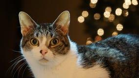猫和反射 免版税库存图片
