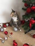 猫和圣诞树 库存图片