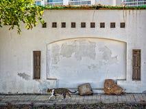 猫和墙壁在沙姆沙伊赫,西奈, 库存照片