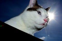 猫和太阳 免版税库存图片