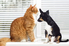 猫和小狗在窗口 免版税库存照片