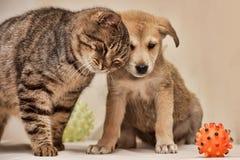 猫和小狗 免版税库存照片