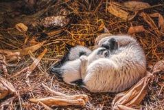 猫和小猫在哺乳期时 免版税库存图片