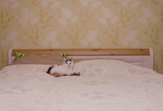 猫和床 免版税库存图片