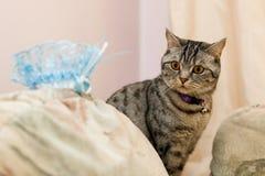 猫和新娘辅助部件 库存图片