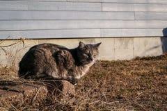 猫和日落光 库存照片