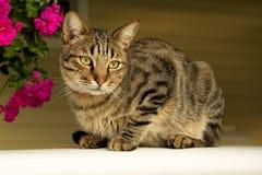 猫和明亮的花在夏日 免版税库存照片