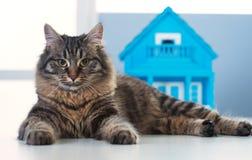 猫和模型房子 免版税库存图片