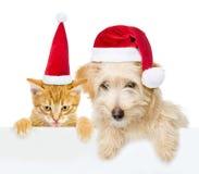 猫和狗与偷看从后面空的委员会和看照相机的红色圣诞节帽子 背景查出的白色 免版税库存照片