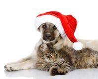 猫和狗与圣诞老人帽子。 免版税库存图片