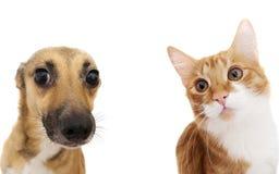 猫和狗偷看 免版税库存照片