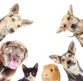 猫和狗和试验品 图库摄影