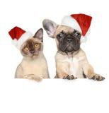 猫和狗在圣诞节帽子 免版税库存照片