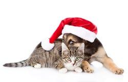 猫和狗在红色圣诞节帽子 背景查出的白色 免版税库存照片